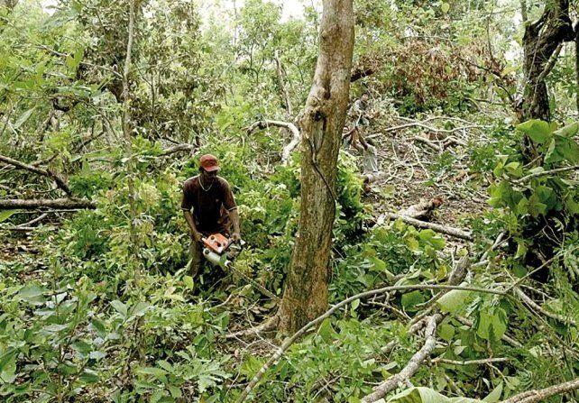 Drones: nuevos aliados contra la deforestación