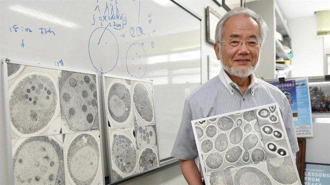 Nobel de Medicina para Yoshinori Ohsumi por descubrir el procedimiento de la autofagia