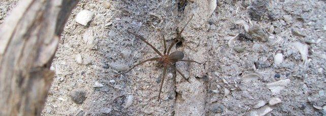 Un niño se encuentra grave tras ser picado por una araña
