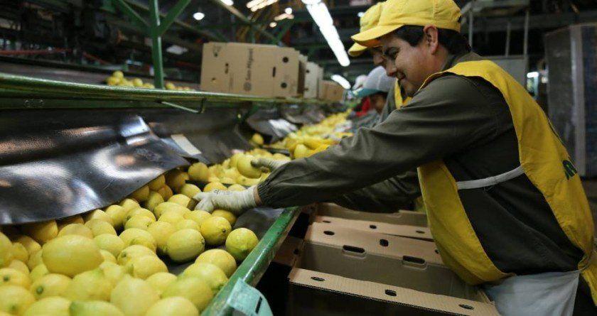 El gobierno de Trump extendió la suspensión al ingreso de limones tucumanos