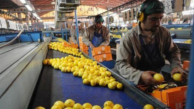 Tucumán quedó a un paso de exportar limones a México