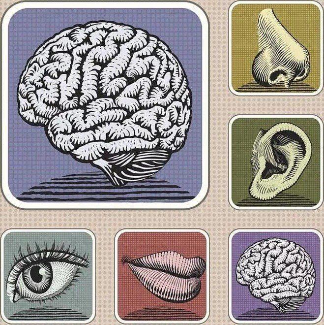 Los enigmáticos sentidos que no sabíamos que teníamos