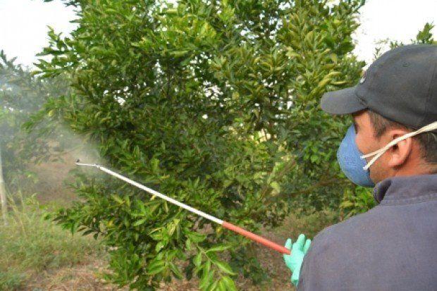Detección y erradicación de HLB en Santiago del Estero
