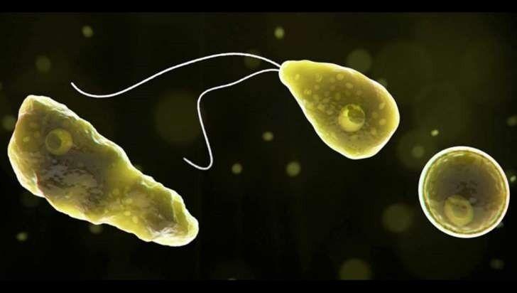 Reportan por primera vez en Argentina un caso de la ameba come cerebros