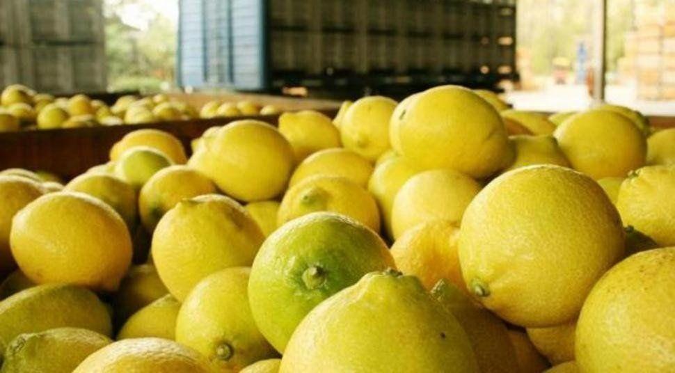 El limón tiene alicuota cero con condiciones