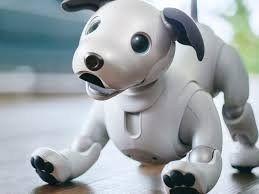 Con lágrimas y oraciones budistas, así despiden a los perros robot en Japón