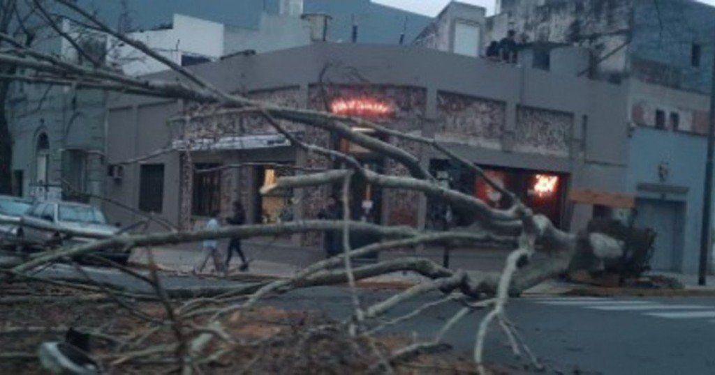 Un diluvio derrumbó un árbol de gran magnitud en Capital Federal