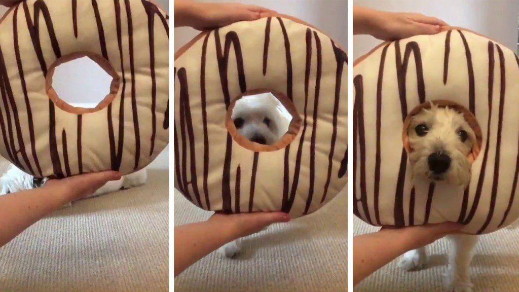 El nuevo desafío viral que tiene a los perros como protagonistas