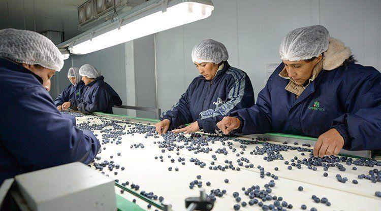 El arándano tucumano, cada vez más cerca de China
