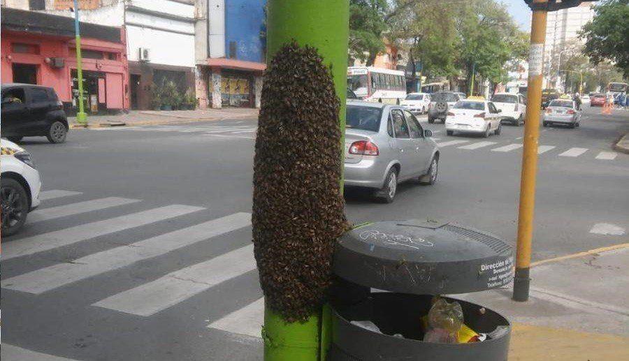 Abejas africanas causaron temor en la capital tucumana