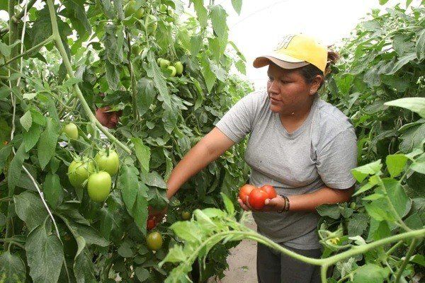 Las trabajadoras del campo aseguran que producen la mitad de los alimentos del planeta
