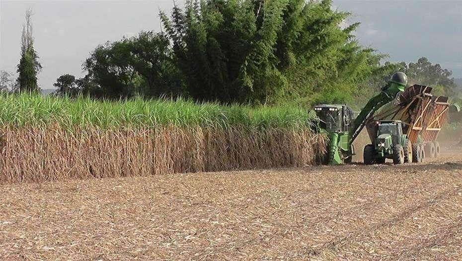 Sobrestock: Los cañeros piden más exportaciones de azúcar para salir de la depresión de precios