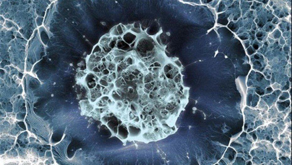 Células madre: buscan regularlas como remedios biológicos y frenar el vacío legal en el país