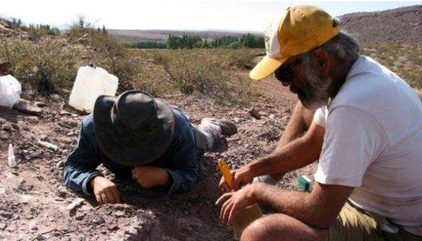 Encontraron una nueva especie de dinosaurio en Neuquén