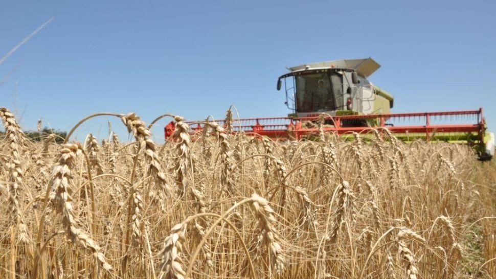 Agroindustria estima una cosecha de trigo un 8,1% por encima de la campaña pasada