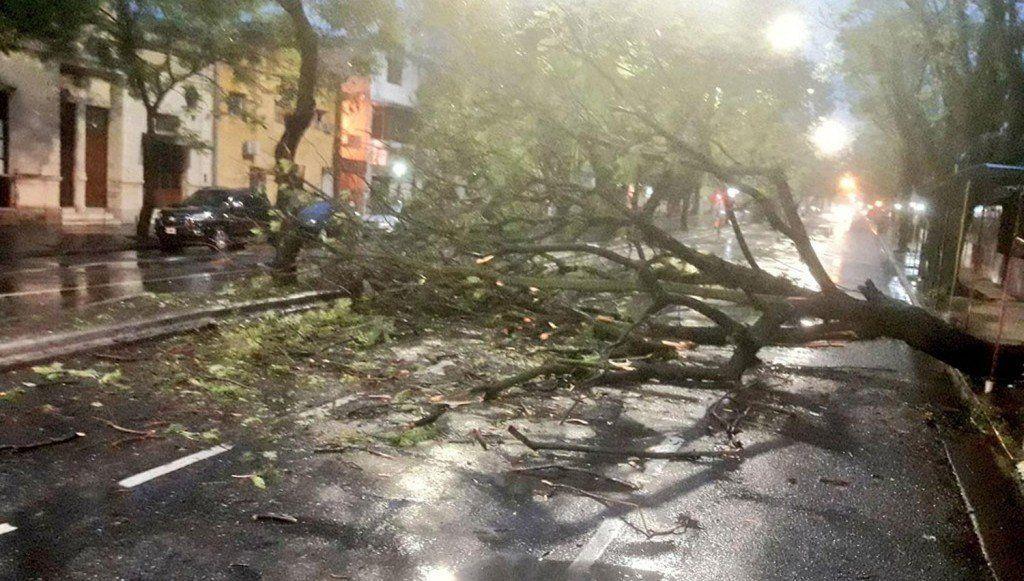 Se registraron caída de árboles en capital y Yerba Buena