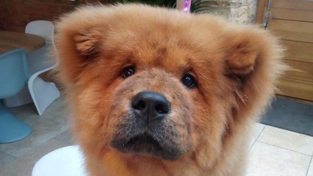 Un cachorrito fue detenido en Inglaterra y el pedido de su liberación se volvió viral!
