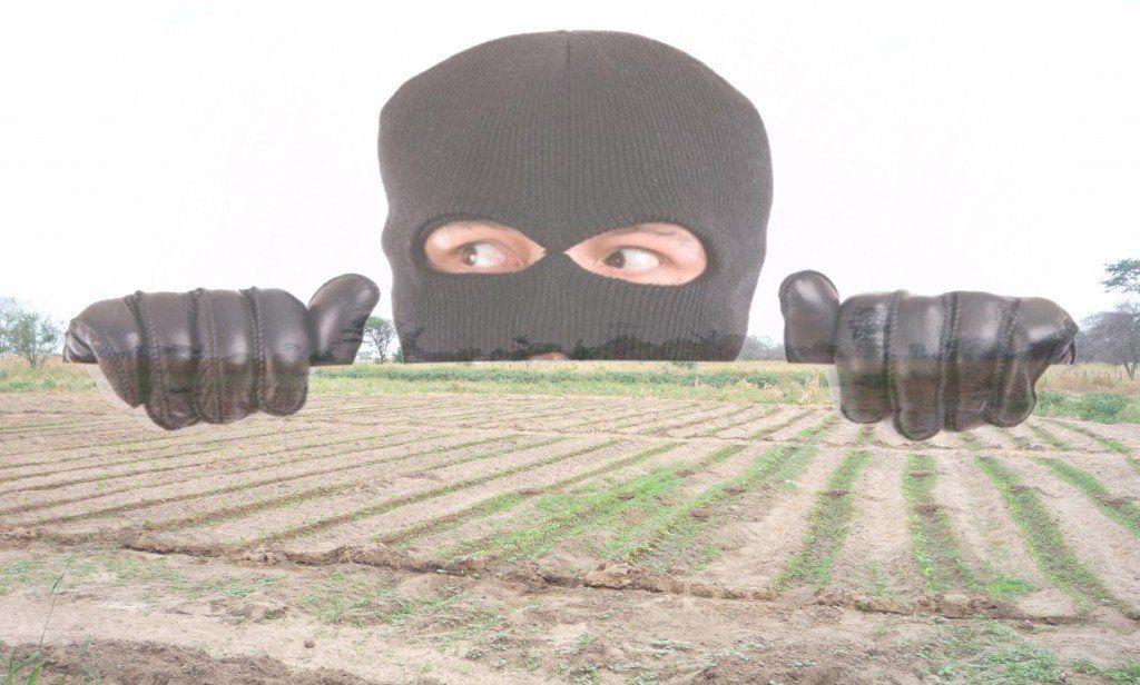 Cansados por la inseguridad, agricultores difundieron un comunicado