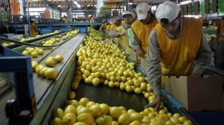 Una citrícola tucumana recibirá financiamiento por 100 millones de dólares