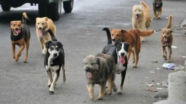 Un movimiento llevará adelante una marcha contra el maltrato animal