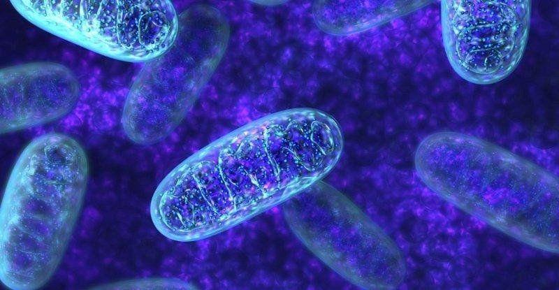 Científicos descubrieron lo imposible: niños con ADN mitocondrial heredado por la vía paterna
