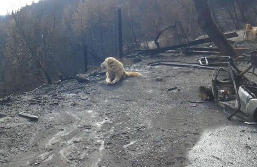 Un perro sobrevivió al incendio de California y esperó a los dueños durante un mes en las ruinas de su casa