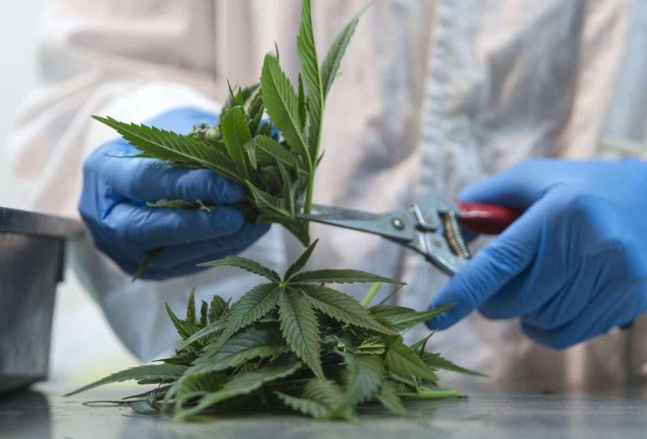 El gobernador de Nueva York lanzó un plan para legalizar la marihuana