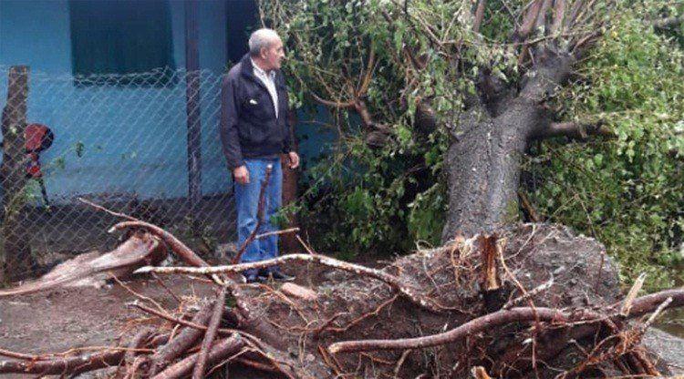 El viento provocó caída de árboles y postes de luz en el interior de la provincia