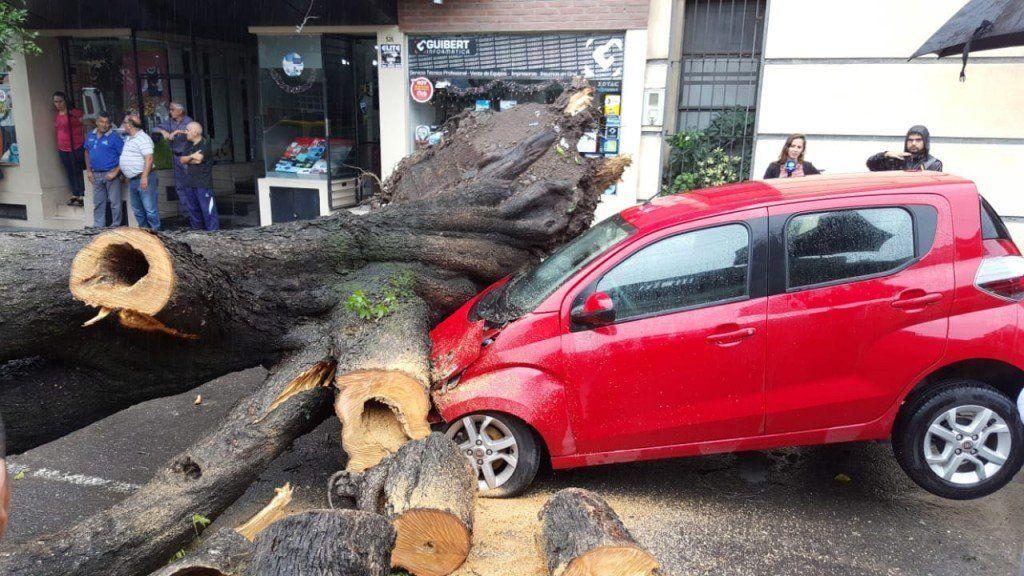 La tormenta provocó la caída de cinco árboles y dos postes de luz con 42 mm de lluvia en la ciudad