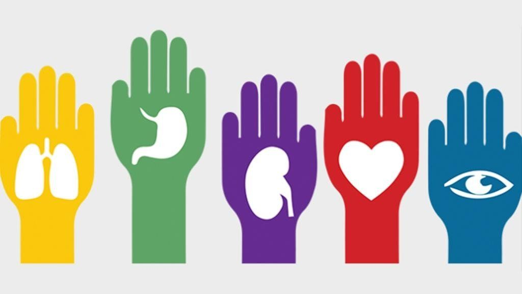 La gente toma cada vez más conciencia sobre la donación de órganos