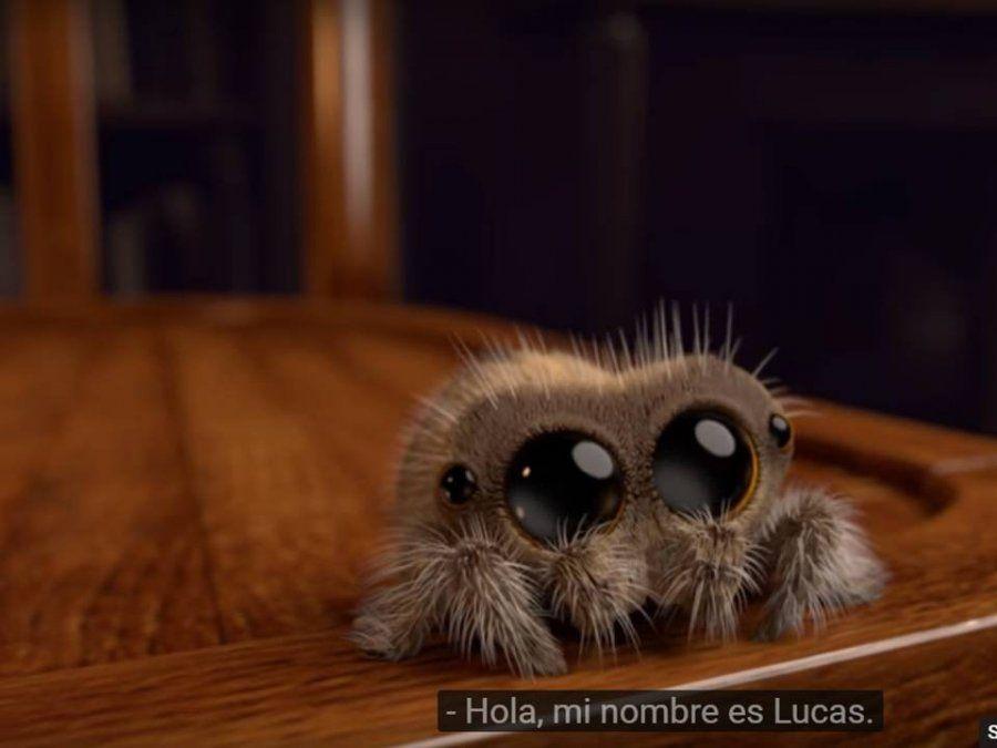Tiene ojitos tiernos, saluda con patitas peludas… es una araña y la vas a adorar