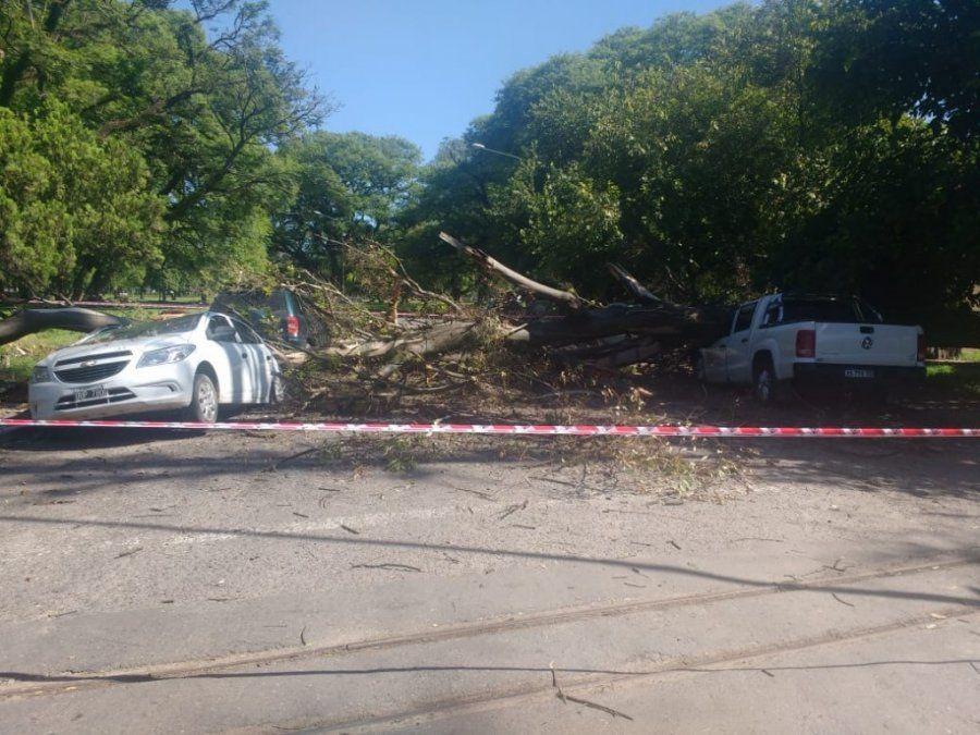 Autos que estaban estacionados fueron aplastados por un árbol que cayó en el parque 9 de Julio