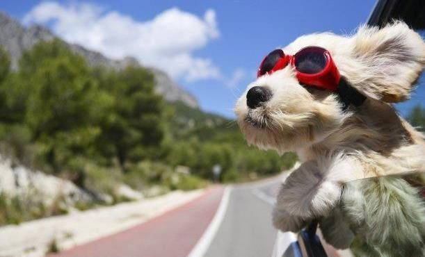 Mascotas en vacaciones ¿los dejamos en casa o los llevamos con nosotros?