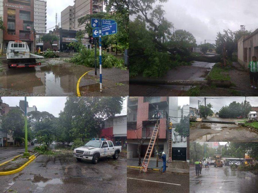 Árboles que cayeron arrastrando el tendido eléctrico causaron daños en la capital y dejaron sin luz a cientos de vecinos