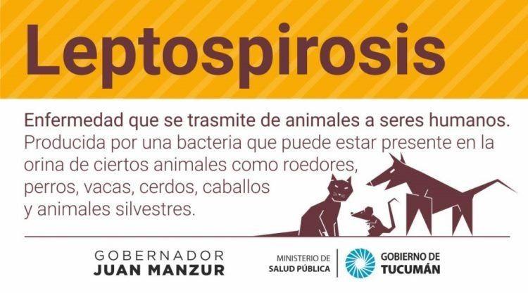 Qué hay que tener en cuenta para prevenir la Leptospirosis