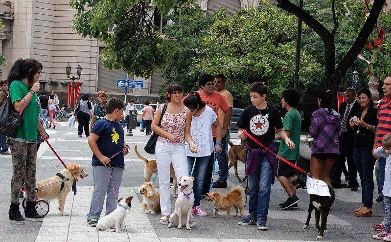 Danos una pata desembarcará en plaza Independencia