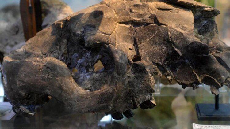 Cierra un museo de Bariloche que tiene más de 10 mil restos fósiles