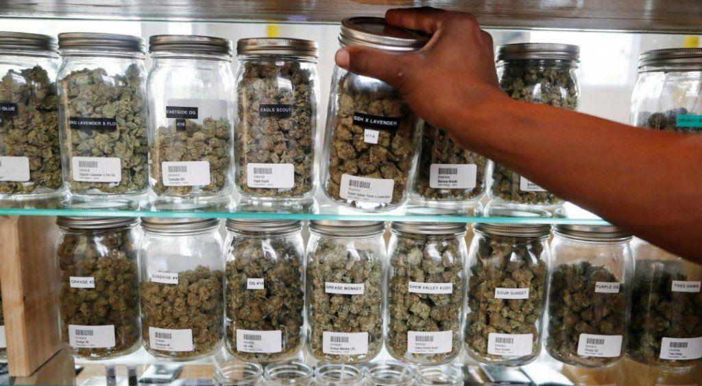 Habilitan al primer centro de cultivo de cannabis medicinal del país