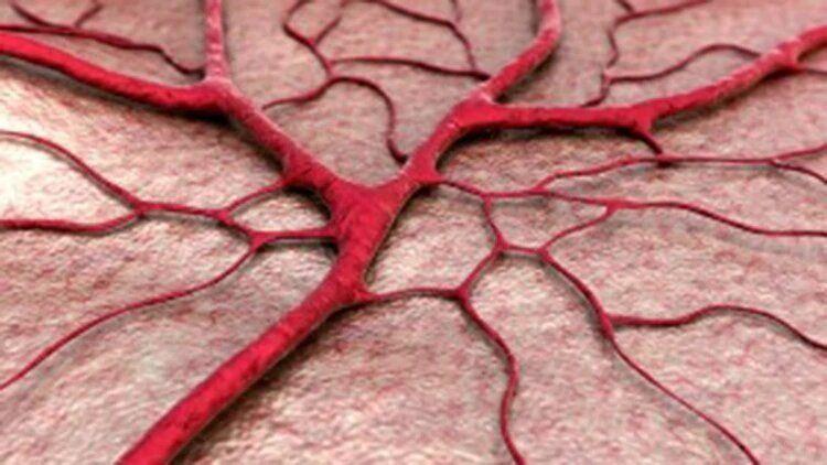 Crean vasos sanguíneos in vitro para recuperar corazones infartados
