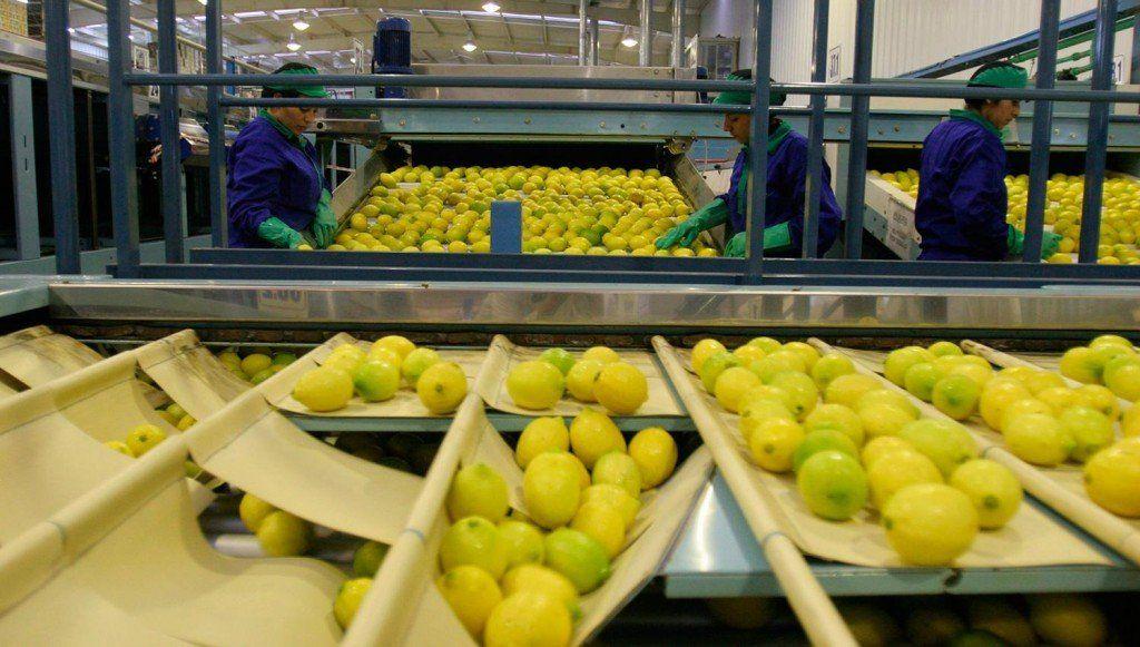 Destacan la posibilidad de que los limones tucumanos puedan ingresar a la India