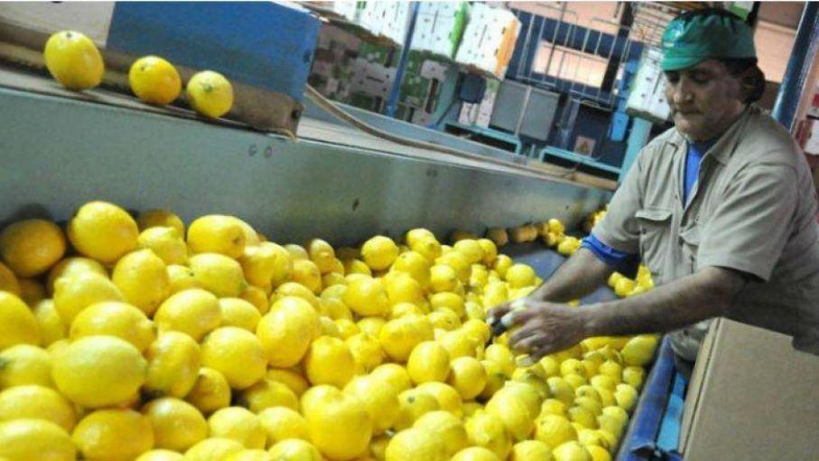 Aceptaron el ingreso de limones tucumanos a Vietnam