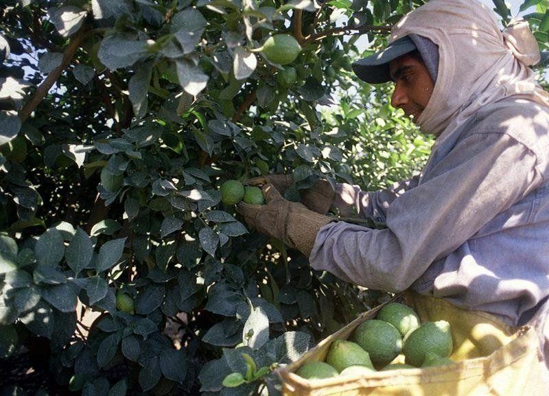 Los trabajadores rurales cobrarán la asignación familiar la semana próxima