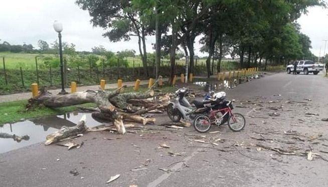 Orán: cayó un árbol y aplastó a un hombre y a su hijo