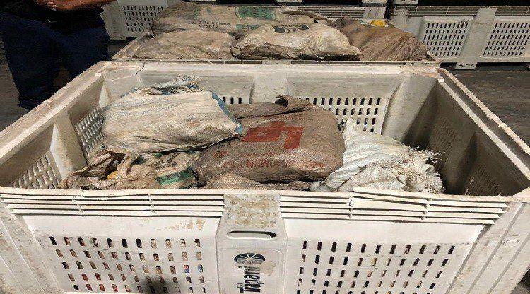 Control de HLB: Decomisan 30 bolsas cargadas con limón