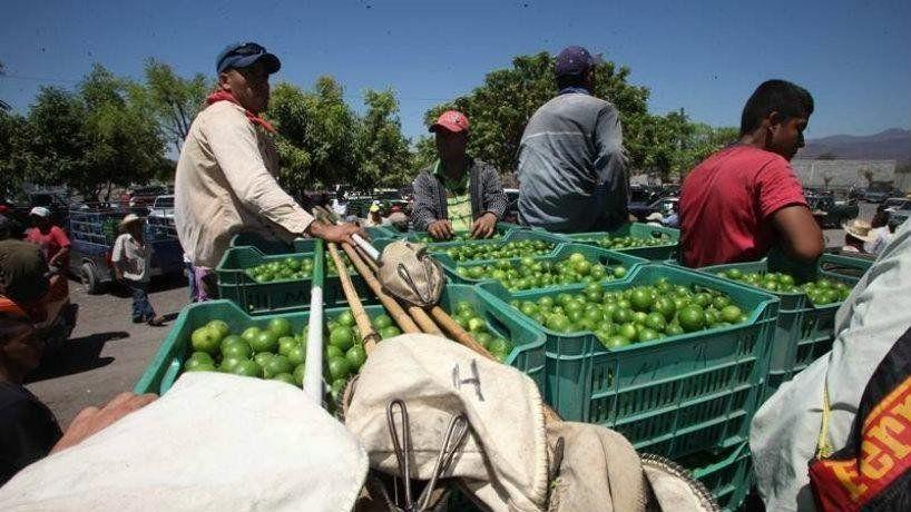 Trabajadores rurales cobrarán desde el lunes los $700 adicionales