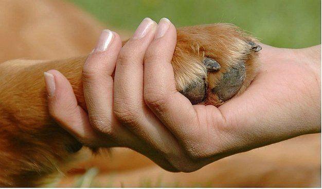 Los animales también tienen derechos y su salud depende de la conciencia que tengamos de ello