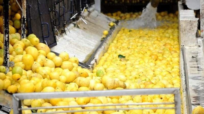 Con mediación del Gobierno, se acordó el normal desarrollo de la campaña citrícola