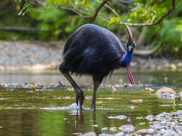 Un pájaro mató a su cuidador en el norte de Florida