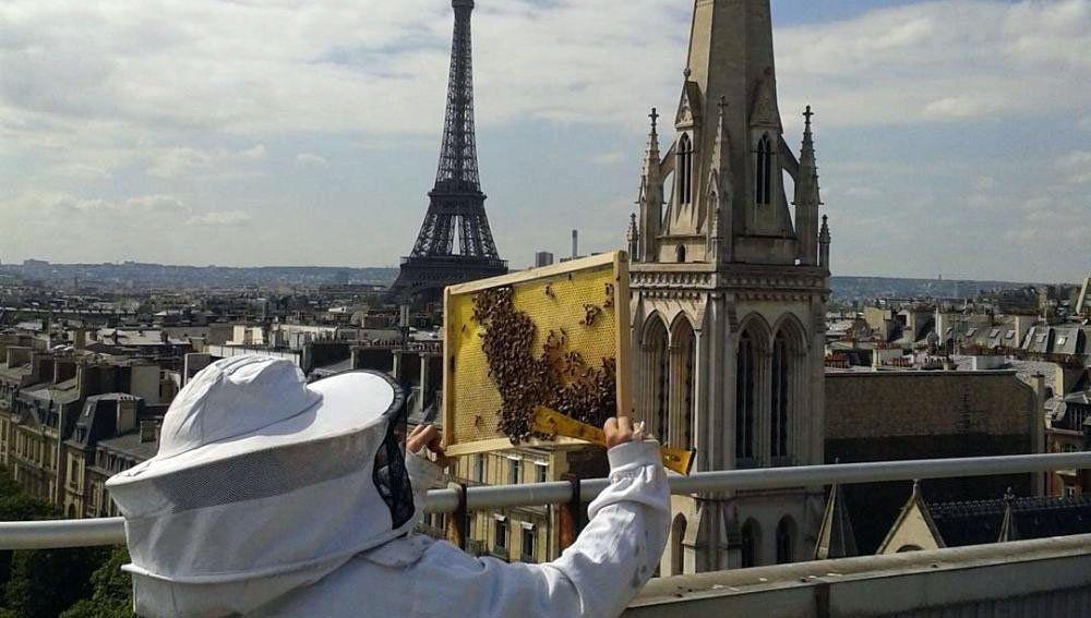 Las 200.000 abejas de la Catedral se salvaron del incendio