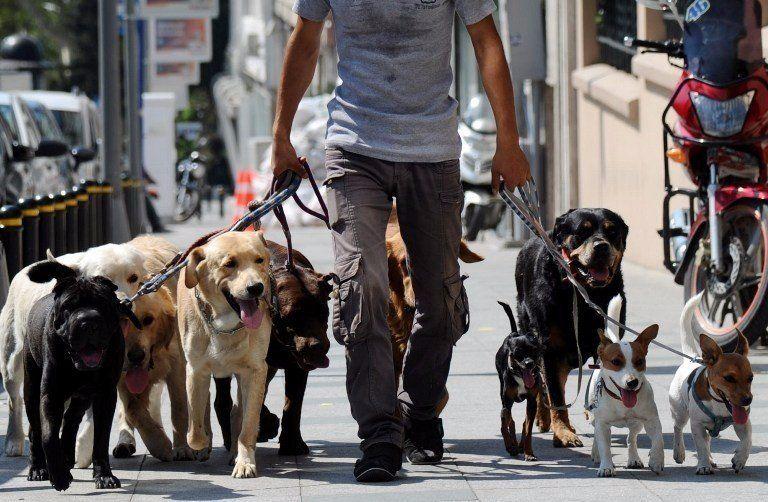Crearán un registro de los paseadores de perros en la ciudad de Salta